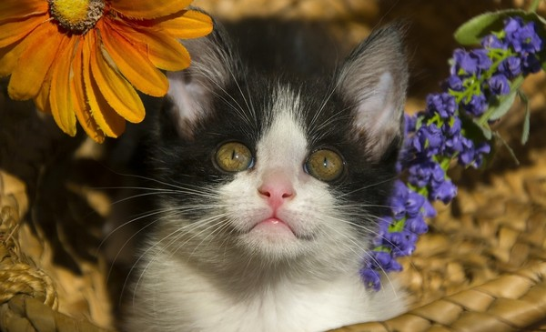 Kitty hiding amongst flowers